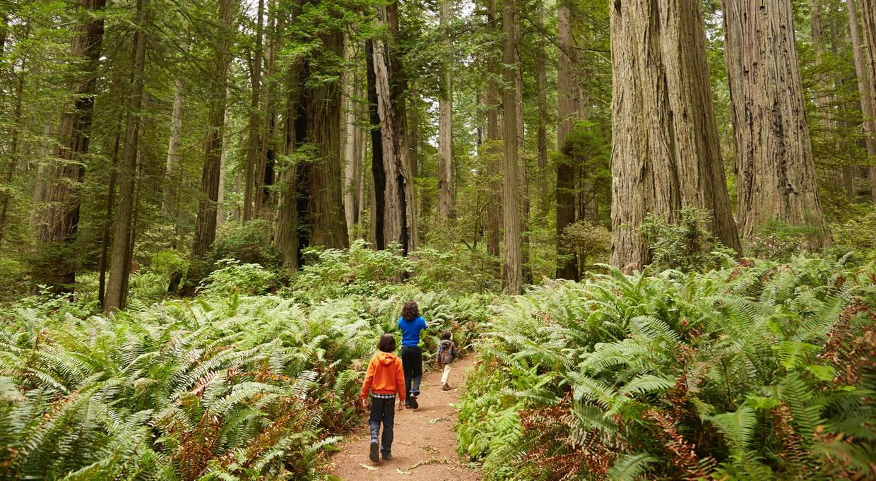 Family hiking on a path in the woods